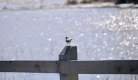 Fågel på ett wood staket royaltyfri bild