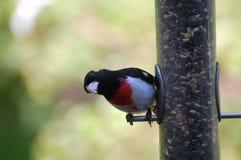 Fågel på förlagematare Arkivfoto