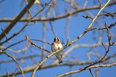 Fågel på filial Royaltyfri Bild