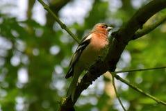 Fågel på filialen av ett träd royaltyfria foton