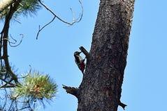 Fågel på filialen av ett träd arkivfoton