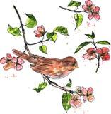 Fågel på filialen med blomningar Fotografering för Bildbyråer