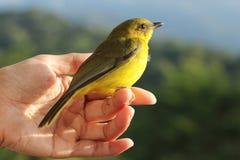 Fågel på fingret Fotografering för Bildbyråer