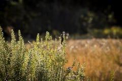 Fågel på gräs i Israel royaltyfria bilder