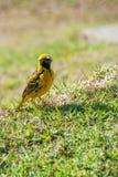 Fågel på gräset Arkivbilder