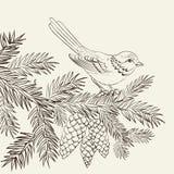 Fågel på julgran och pinecone. Arkivfoto