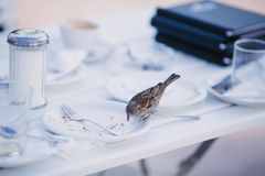 Fågel på kanten av en platta royaltyfria foton