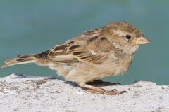 Fågel på laken Arkivfoton