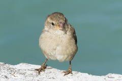 Fågel på laken Fotografering för Bildbyråer