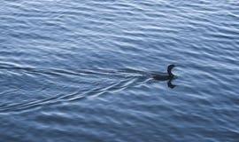 Fågel på laken Royaltyfri Foto