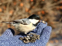 Fågel på min hand Royaltyfri Foto
