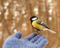 Fågel på min hand Fotografering för Bildbyråer