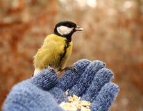 Fågel på min hand Royaltyfri Bild