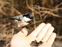 Fågel på min hand Arkivbild