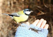 Fågel på min hand Arkivfoto