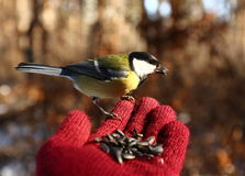 Fågel på min hand Arkivfoton
