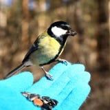 Fågel på min hand Arkivbilder