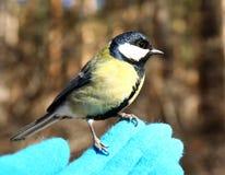 Fågel på min hand Royaltyfria Foton