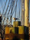 Fågel på pir med skeppet i bakgrund Fotografering för Bildbyråer