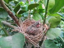 Fågel på redet Royaltyfri Foto