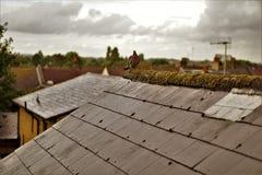 Fågel på regnig dag för tak royaltyfri bild