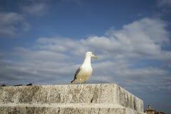 Fågel på slotten Arkivfoto