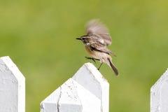 Fågel på staketet Fotografering för Bildbyråer