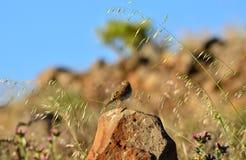 Fågel på stenen Royaltyfri Bild