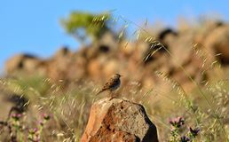 Fågel på stenen Arkivfoto