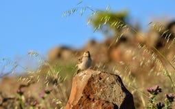 Fågel på stenen Arkivbilder