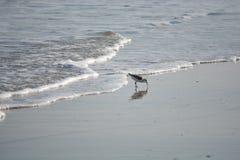 Fågel på stranden Arkivbild