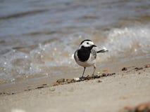Fågel på stranden royaltyfria bilder