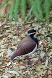 Fågel på stupade sidor Arkivfoto
