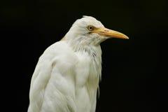 Fågel på svart bakgrund Arkivfoton