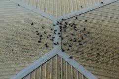 Fågel på taket Arkivbilder