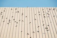 Fågel på taklägga Arkivfoton