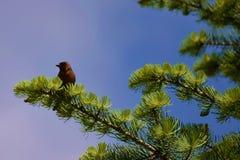 Fågel på treen Arkivbilder