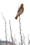 Fågel på växten Arkivbilder