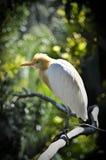 Fågel på zoo Royaltyfri Fotografi