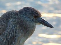 Fågel Puerto Rico Royaltyfri Fotografi