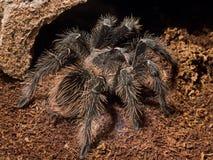 fågel som äter spindeln Arkivbild