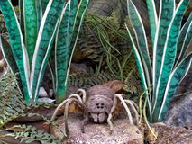 fågel som äter spindeln Arkivbilder