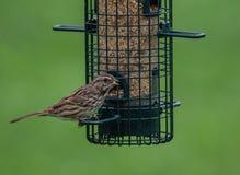Fågel som besöker förlagemataren royaltyfri fotografi
