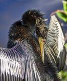 Fågel som beskär morgonsolsken Royaltyfri Fotografi