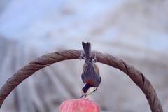 fågel som biter en jordnöt royaltyfri fotografi