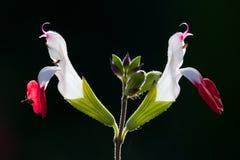 Fågel-som blommor Royaltyfri Foto