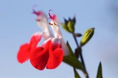 Fågel-som blommor Arkivbilder