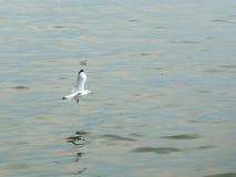 fågel som flyger den rena seagullskyen Royaltyfri Foto