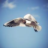 fågel som flyger den rena seagullskyen Arkivbilder