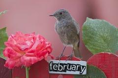 Fågel som sätta sig på ett Februari dekorerat staket arkivbild